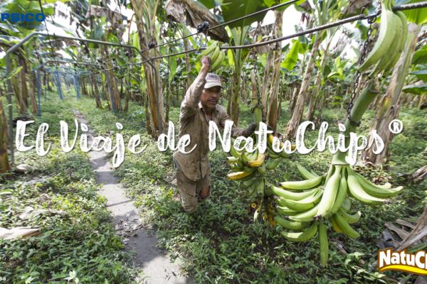 El viaje de Natuchips®: del campo a tus manos