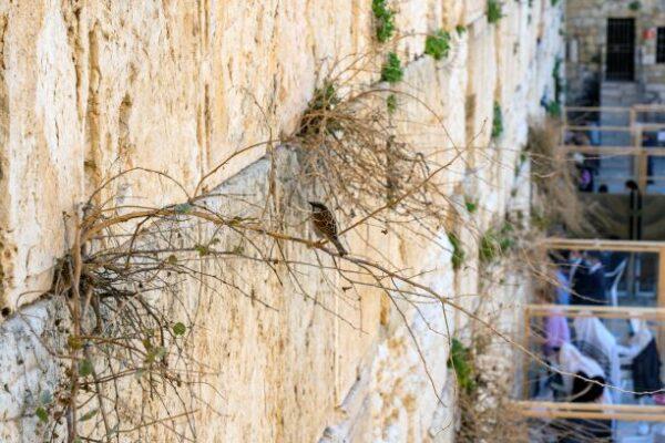 El Muro de los Lamentos de Israel es inspeccionado dos veces al año por especialistas en conservación