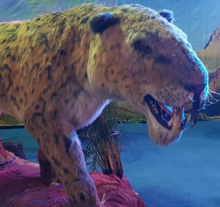 Dinosaurios una experiencia jurásica 2021